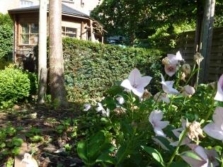 tuinhuisje - Inblauw BnB - zomerzicht