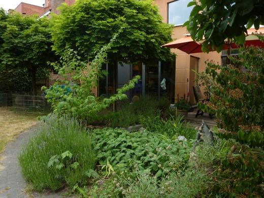 ons huis - zicht vanuit de tuin - zomer
