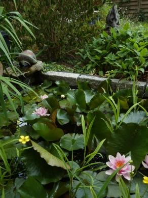 vijver - waterlelies - Inblauw Bed and Breakfast - zomer
