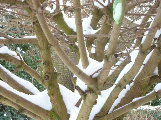 Inblauw B&B - winter view - tree