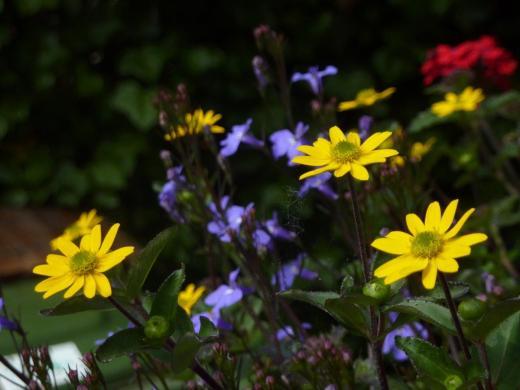 Flower in the garden of Inblauw B&B